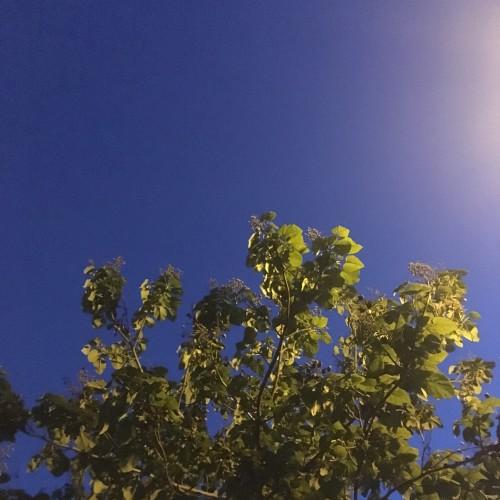Green/Blue: 325