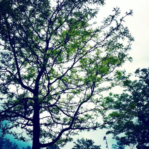 Green/Blue: 156