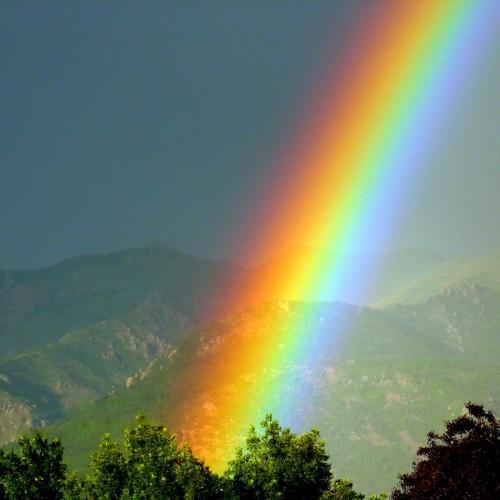 Rainbow: 14