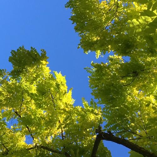 Green/Blue: 255