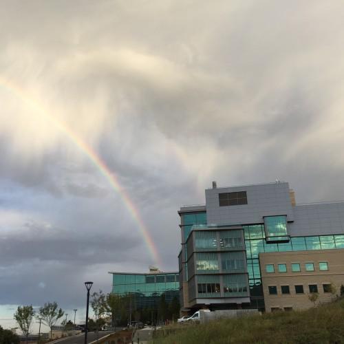 Rainbow: 231