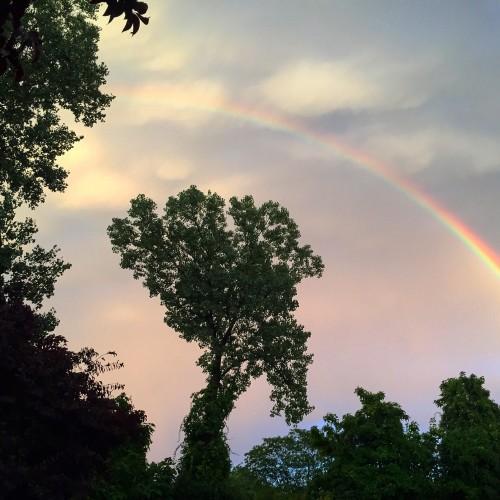 Rainbow: 166