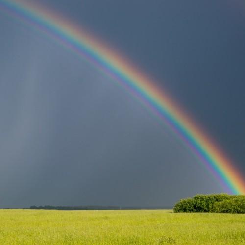 Rainbow: 4