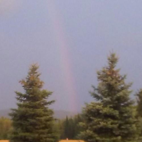 Rainbow: 214